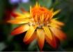 Flower Wild