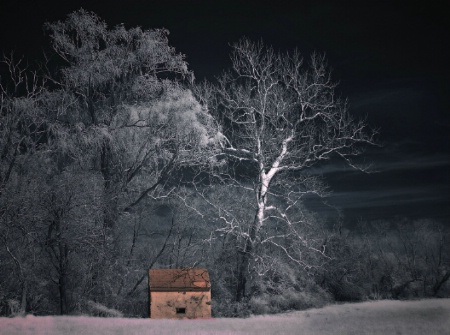 Little House in the Forest