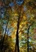 natures glow