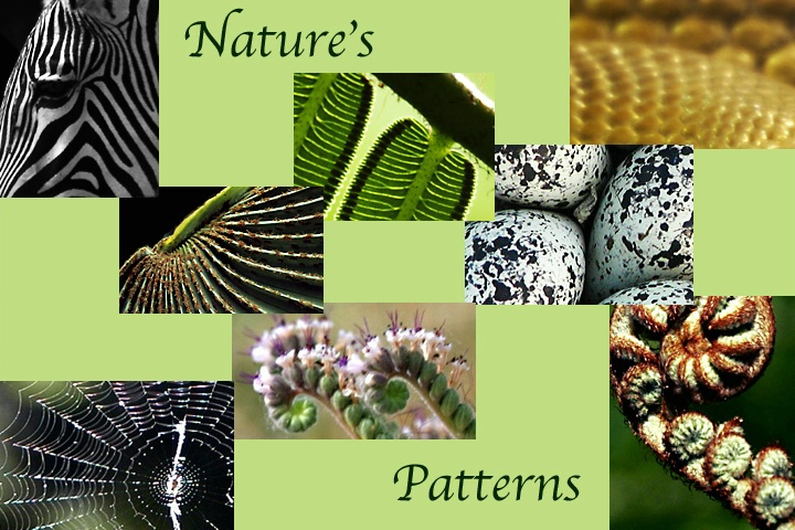 Nature's Patterns Series