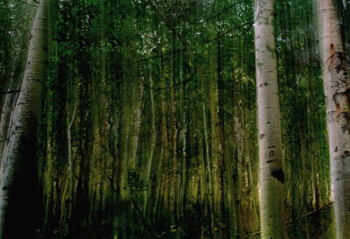 Aspen Grove in Motion