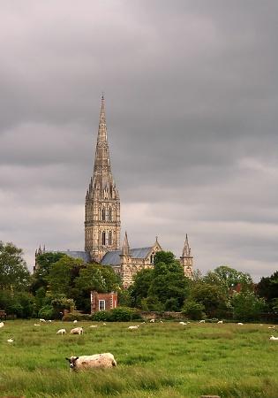 Salisbury Flock