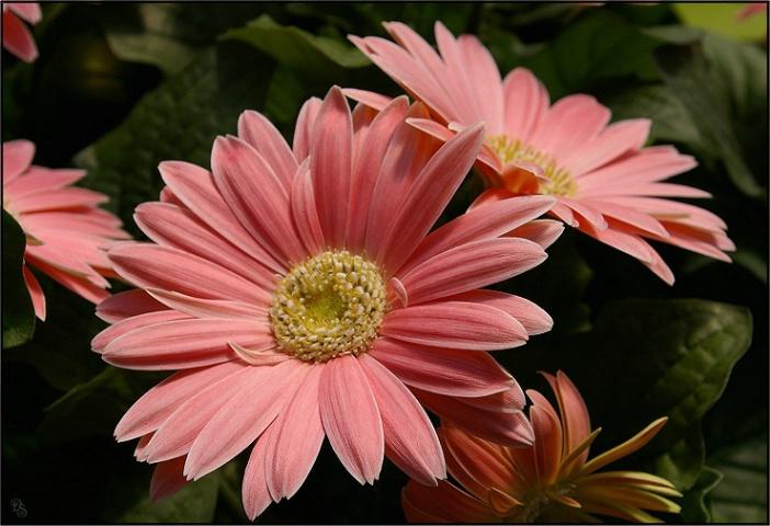 pink_coolness