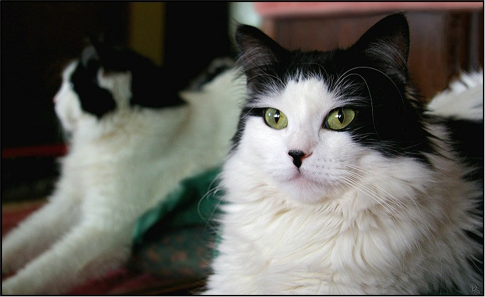 tail_of_two_kitties