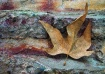Abstract leaf