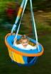 Swinging happily