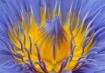 FLOWER BALLET