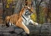 Regal Beast