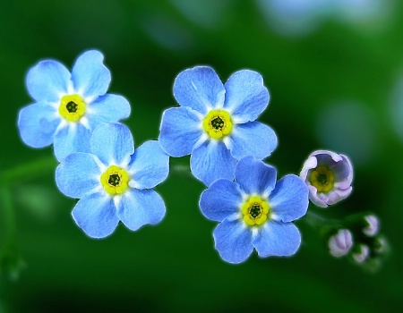 Forget Me Knots