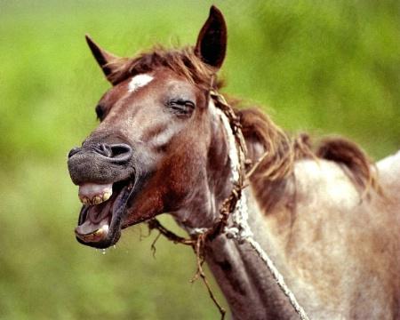 HORSES01.tif