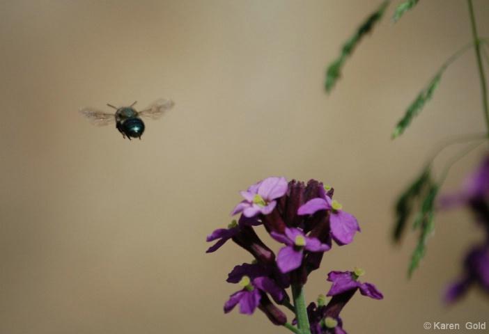 Flying away - ID: 3942905 © Karen E. Gold