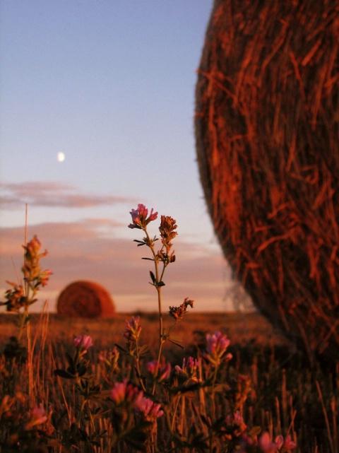 Dawn on Dakota
