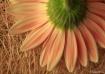 Soft pink tones