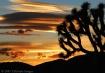 Sunset at Joshua ...