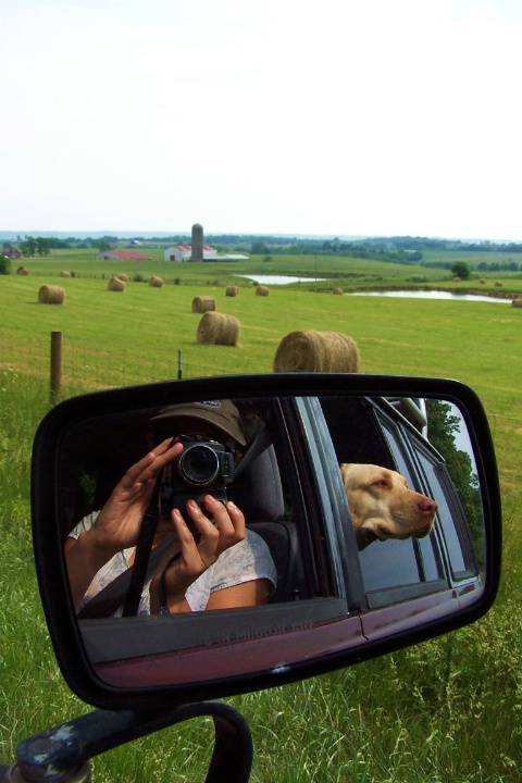 Midwest Road Trip with Dog