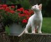 Kitten on a Missi...