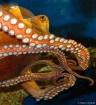 calamari non-frit...