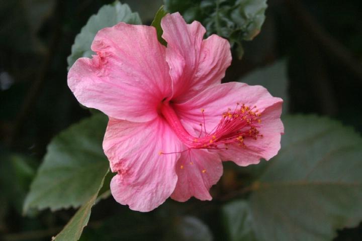 Geita Flower