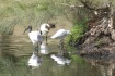 Ibis and Heron re...