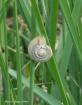 snail's parad...