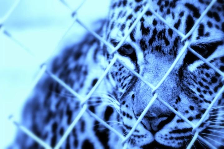 Frozen in Captivity