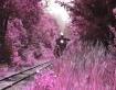 fanstasy train ri...