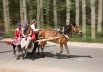 """Horse """"Taxi"""""""