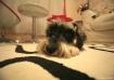 Scruffy sleeping