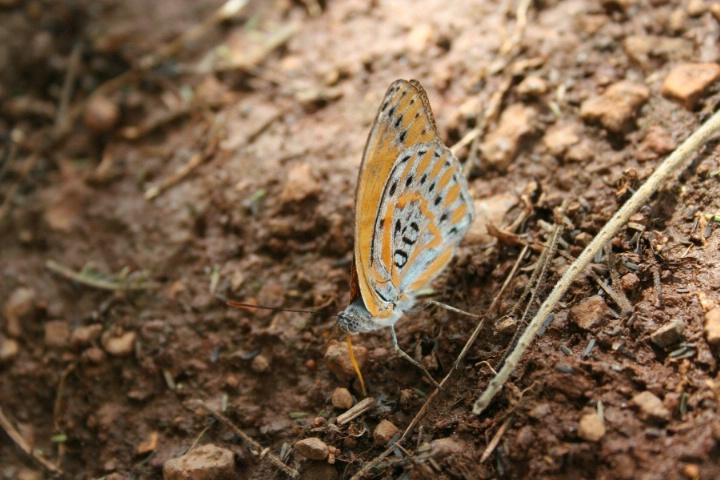 Butterfly -- Close-up mode -- Balance
