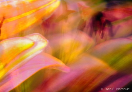 Lily Abstract