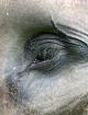 Eye of the Elepha...