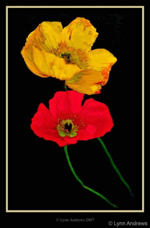Zoe's Poppies - ID: 4071165 © Lynn Andrews