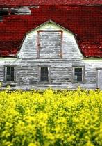 Barn in Bloom