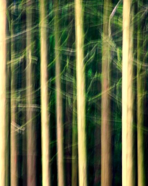 Morning Pines  - ID: 4071937 © Sandra Hardt