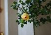 iso_100_flower