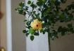 iso400_flower