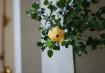 iso3200_flower