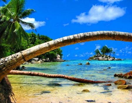 Global warming - palms embracing small island