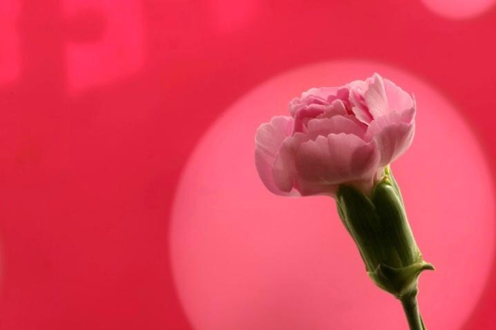 Carnation Comedy Club - ID: 4102268 © Agnes Fegan