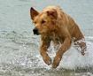 Sea Dogs 3