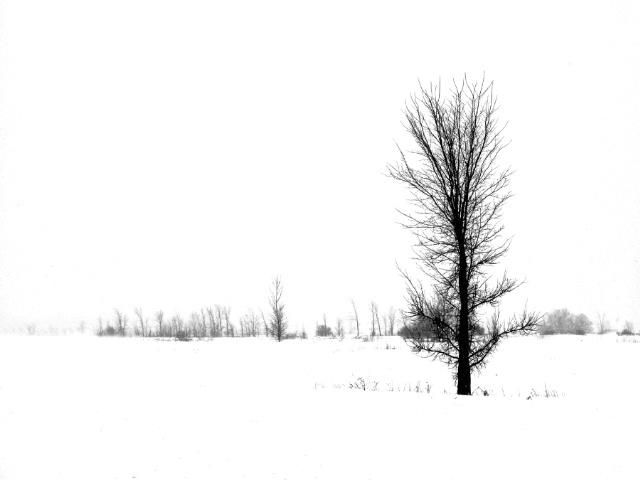 Alone 3