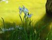 Irises in Ogata S...