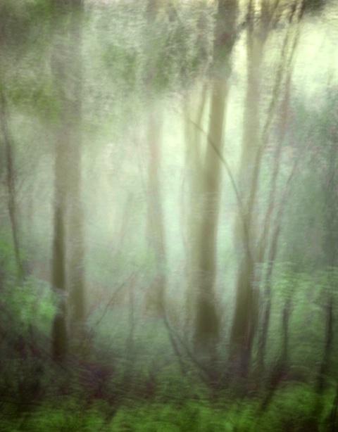 Morning Mist - ID: 4137846 © Sandra Hardt