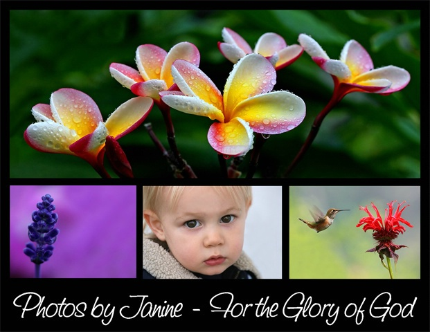 Welcome to photosbyjanine.com