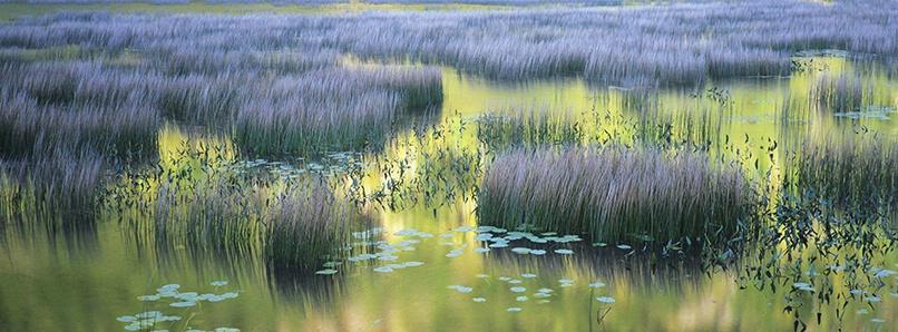 Grasses & Reflection, Acadia National Park - ID: 4147328 © Susan Milestone
