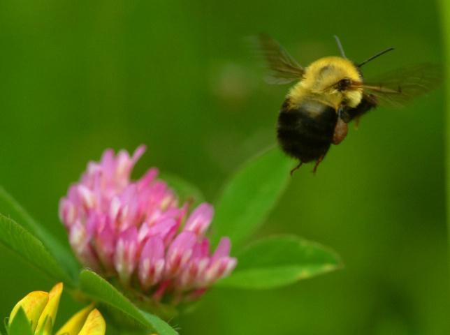 BEE GONE!