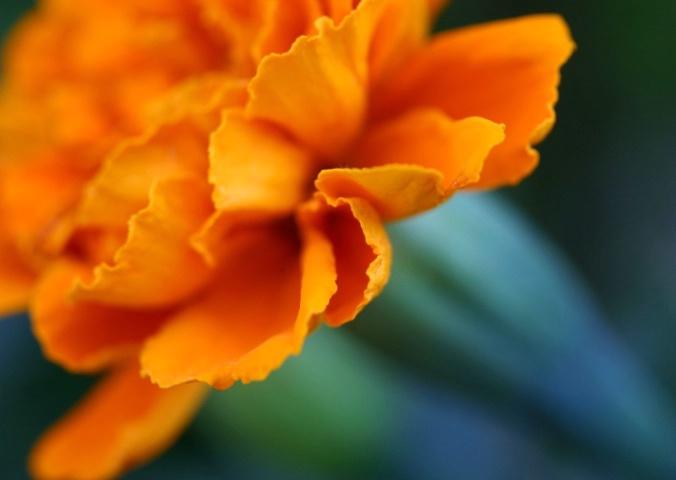 Evolving Orange
