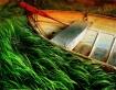 Grassy Voyage