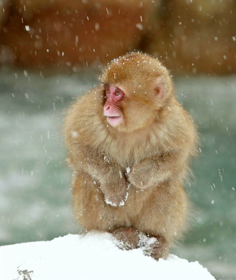 Its Cold Today!