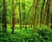 A Woods Along Tip...